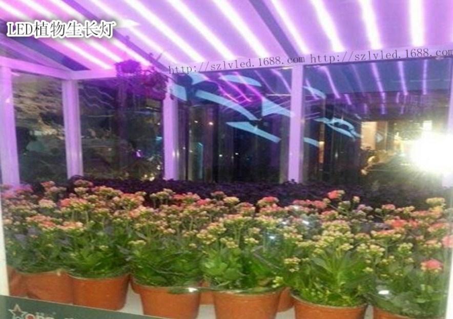 Светодиодная лампа для роста растений LED Lvyingguangdian T8-9W-23W (112-116) - 6