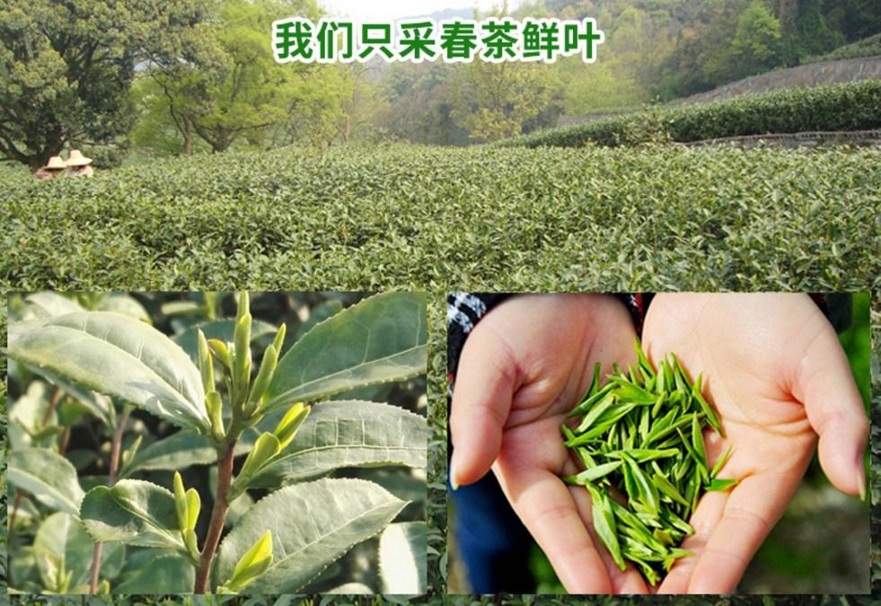Зеленый чай 2016 года YIBEIXIANG TEA (121-103) - 7