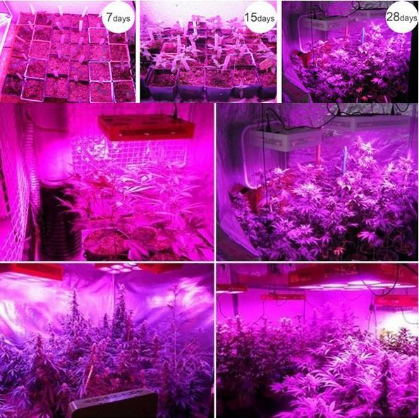 Светодиодная лампа для роста растений HYG05-200X3W-W (112-107) - 6