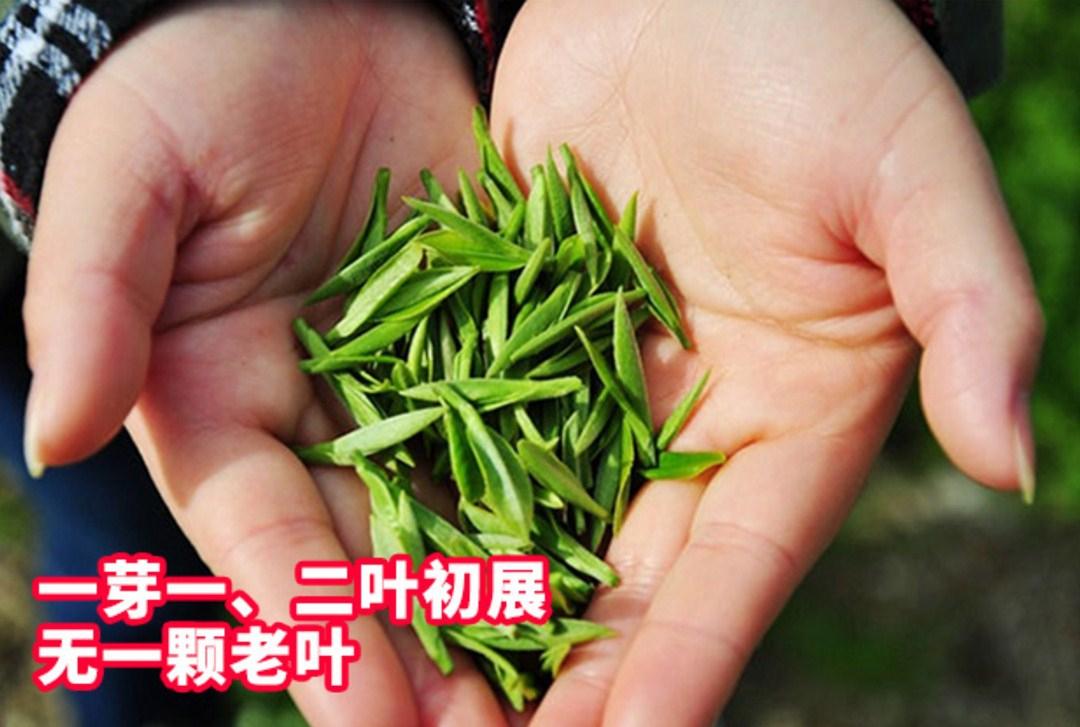 Зеленый чай 2016 года YIBEIXIANG TEA (121-103) - 8