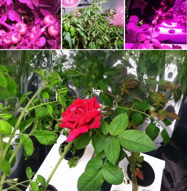 Светодиодная лампа для роста растений HYG-288X3W-W (112-106) - 5