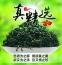 Новый зеленый чай 2016 Qing Cheng Tang (121-102) - 7