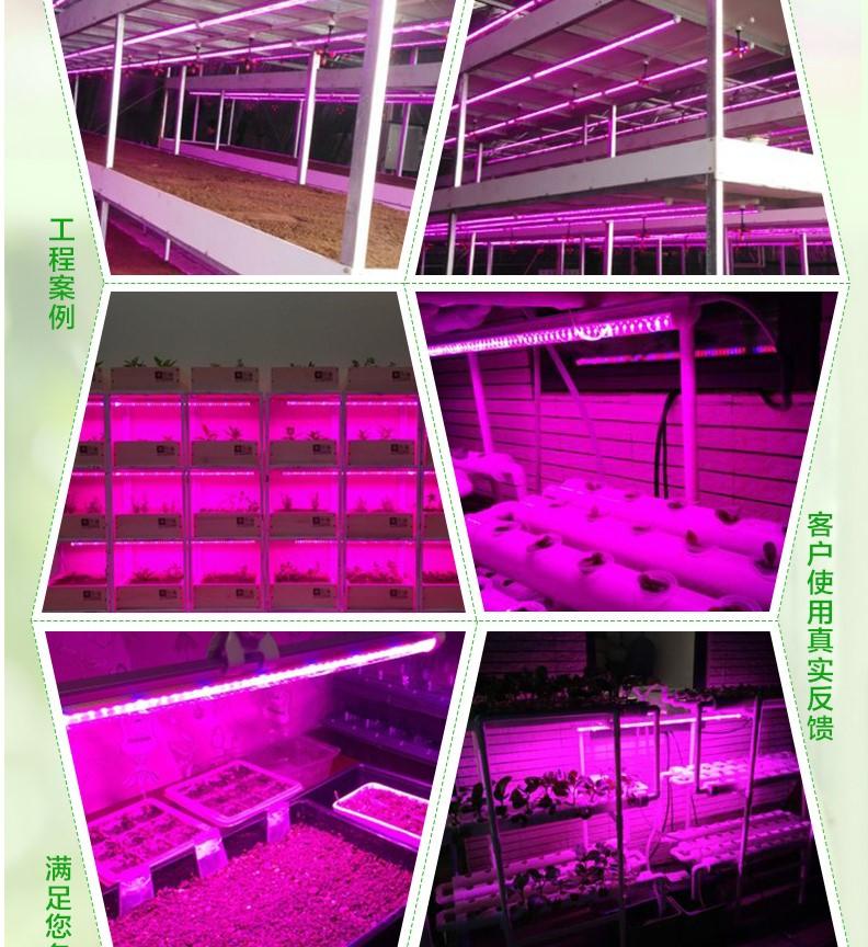 Светодиодная лампа для роста растений WEGA-WAN-T8120-T8-9W-36W (112-102) - 11