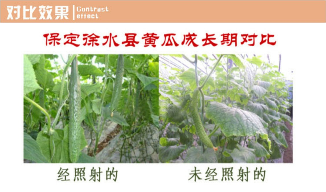 Энергосберегающая лампа для роста растений и абажур Lugal Lighting lg-szd-36-E27 (112-123) - 14