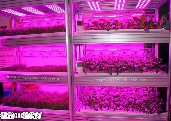 Светодиодная лампа для роста растений LED Lvyingguangdian Т5-T8 (112-115) - 4