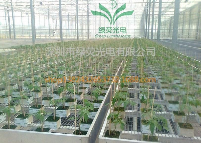 Светодиодная лампа для роста растений LED Lvyingguangdian T5-Т8-ZWD (112-111) - 8