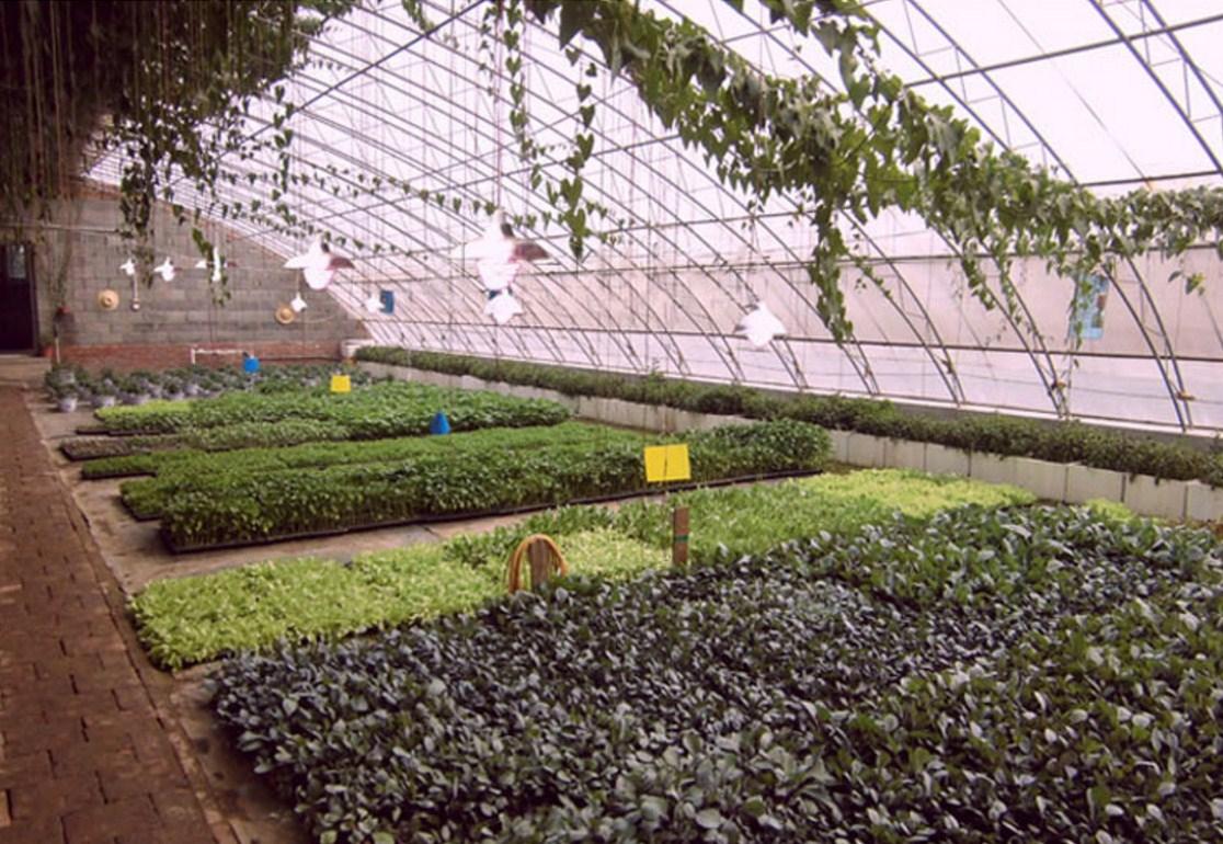 Энергосберегающая лампа для роста растений и абажур Lugal Lighting lg-szd-36-E27 (112-123) - 13