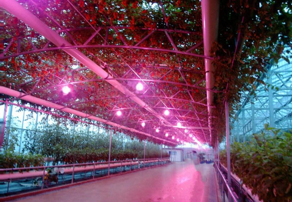 Энергосберегающая лампа для роста растений и абажур Lugal Lighting lg-szd-36-E27 (112-123) - 10