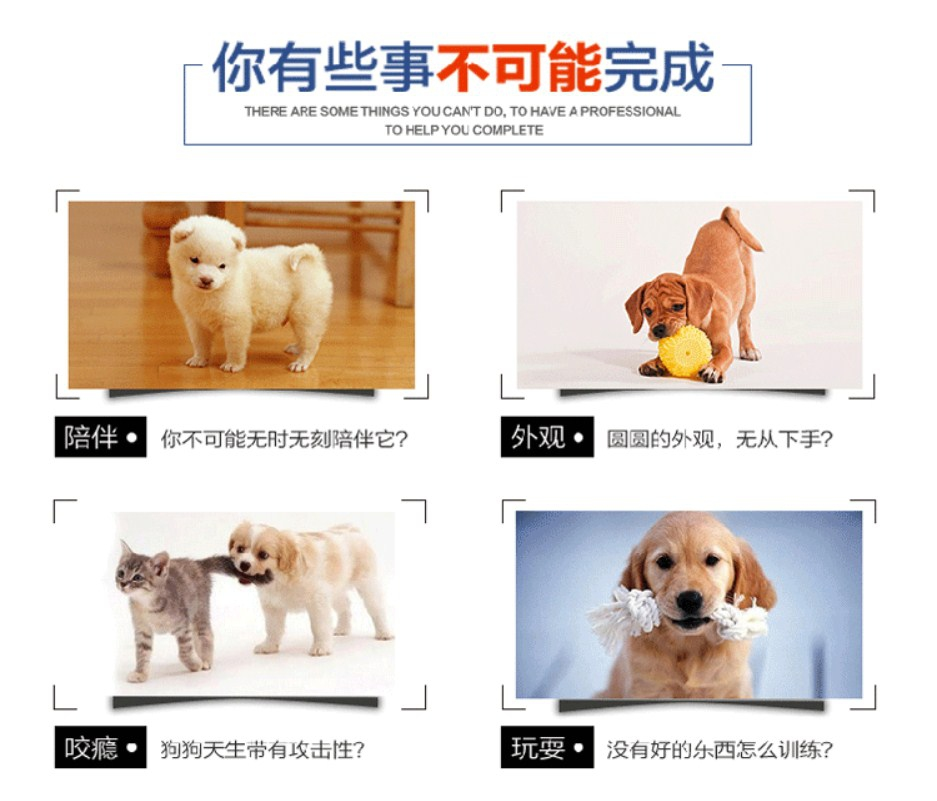 Игрушка для собак CharmingPet - POPPIN' POLKIES (128-101) - 6