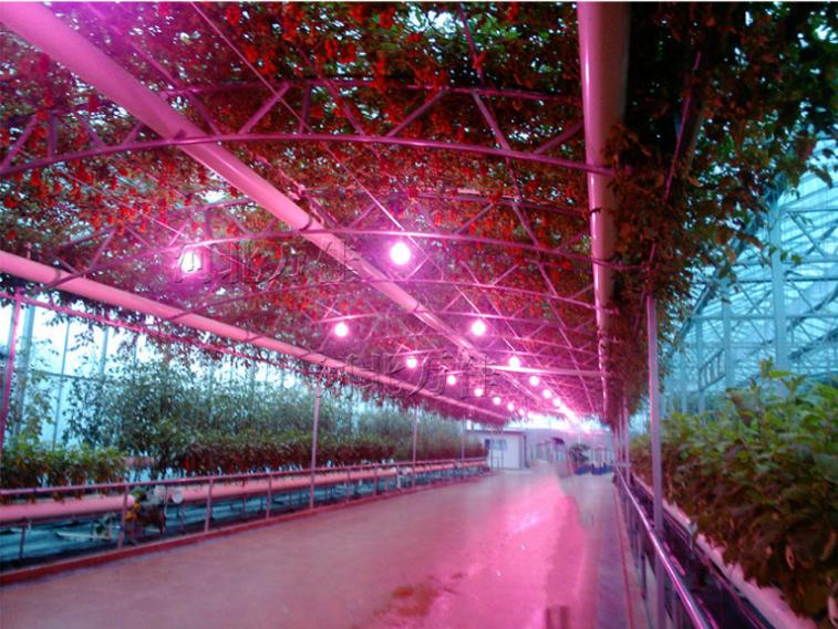 Энергосберегающая лампа для роста растений HBWJIA-E27 (112-117) - 5