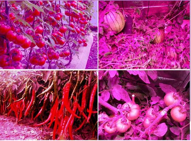 Светодиодная лампа для роста растений HYG05-MINI-100X3W-W (112-105) - 7