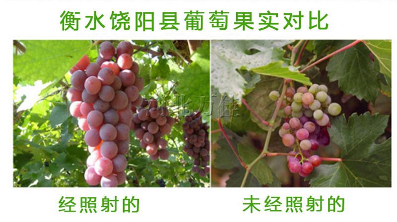 Энергосберегающая лампа для роста растений HBWJIA-E27 (112-117) - 8