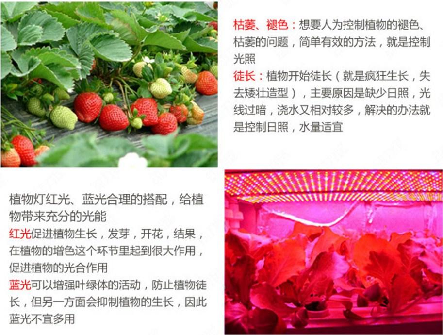 Светодиодная лампа для роста растений Billion Si Bei ZW0112-00-0 на 180-200 Вт (112-118) - 5