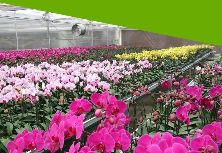 Светодиодная лампа для роста растений WEGA-WAN-P18-E27-5W-18W (112-103) - 4