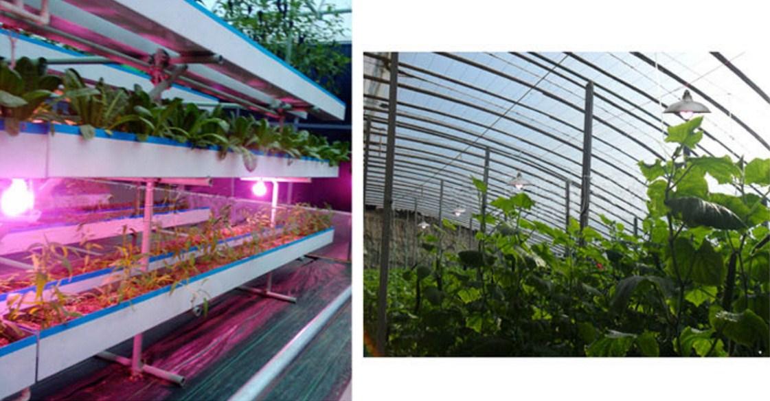 Энергосберегающая лампа для роста растений и абажур Lugal Lighting lg-szd-36-E27 (112-123) - 11