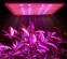 Светодиодная лампа для роста растений Billion Si Bei ZW0139-00-0 на 300 Вт (112-119) - 11
