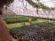 Энергосберегающая лампа для роста растений HBWJIA-E27 (112-117) - 7