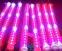 Светодиодная лампа для роста растений LED Lvyingguangdian Т5-T8 (112-115) - 3