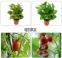 Светодиодная лампа для роста растений LED MORSEN LZ081X (112-114) - 4