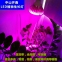 Светодиодная лампа для роста растений LED Qi Xin QX-PTXXA-12W-36W (112-113) - 1