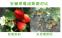 Энергосберегающая лампа для роста растений HBWJIA-E27 (112-117) - 10