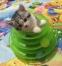 Игрушка для кошек Douges Tower of Tracks (128-108) - 2