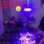 Светодиодная лампа для роста растений LED Qi Xin QX-PTXXA-12W-36W (112-113) - 3